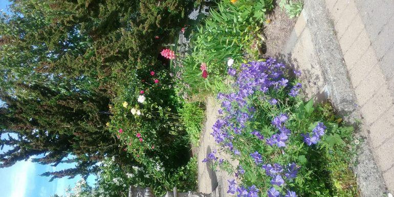 ian garden 2